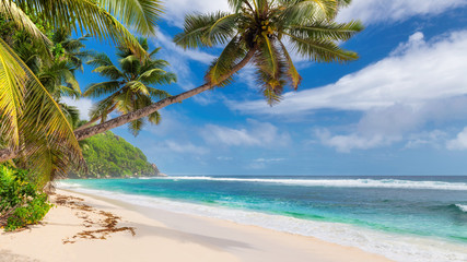 Fototapete - Beautiful beach with palms and turquoise sea in Jamaica island.