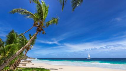Fototapete - Paradise tropical beach. Coconut palm trees on white sunny beach and Caribbean sea.