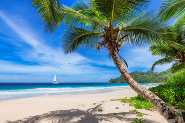 In de dag Palm boom Sandy beach with coconut palm trees and a sailing boat in the turquoise sea on Paradise island.