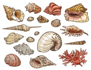 Seashells of snail, clam, shellfish and conch
