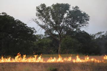 Papiers peints Brun profond savannah fire