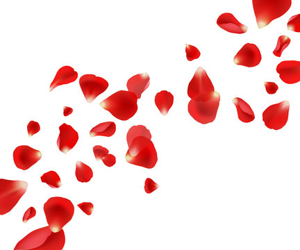 Petal background. Flying rose petals wedding beautiful template design for cards invitation vector pictures. Illustration flying red petal, wedding fly rose