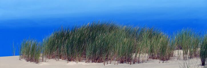 Panorama mit Dünengräsern vor blauem Himmel und Meer