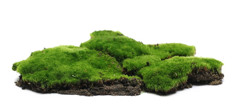 Green moss with soil, dirt pile, isolated on white background