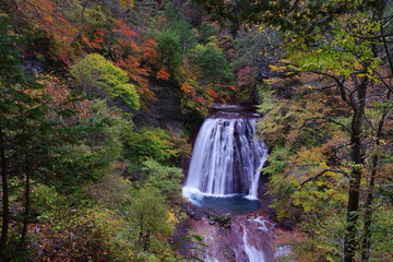 In de dag Bos rivier A big waterfall flowing down the autumn forest C