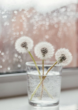dandelions in a glass against a rainy background