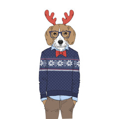 Humanized Beagle breed dog dressed up in Christmas outfits. Design for dogs lovers. Fashion anthropomorphic doggy illustration. Animal wear jacquard pullover, tie bow, glasses, deer horns. Hand drawn