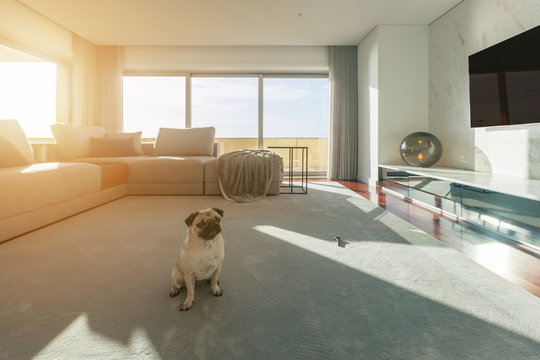 Modern living room interior with little dog sitting on carpet. Big windows, light space