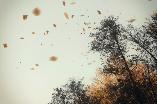 autumn leaves blowing in the wind at the edge of a forest