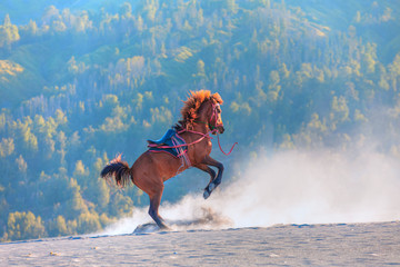 Red horse rearing up on desert - Bromo, Indonesia