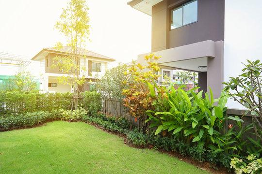 green grass turf in backyard garden landscaping of home