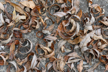 Dry autumn leaves on the ground-background texture image