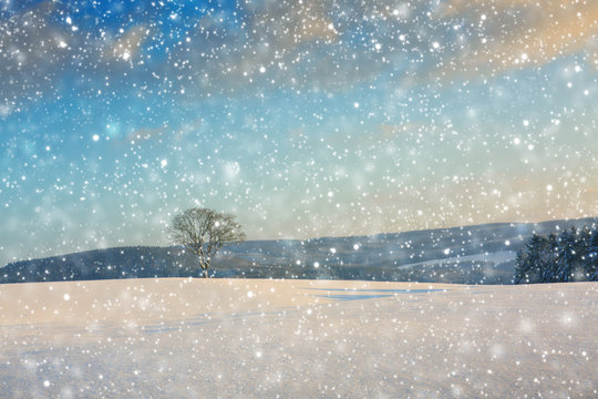Single winter tree in the field and snowfall.