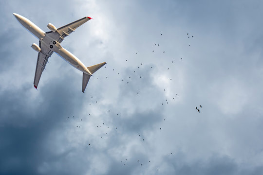 Airplane and birds in the sky. Writing area. Background