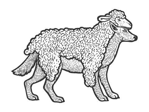 Wolf in sheeps clothing sketch engraving vector illustration. T-shirt apparel print design. Scratch board style imitation. Black and white hand drawn image.