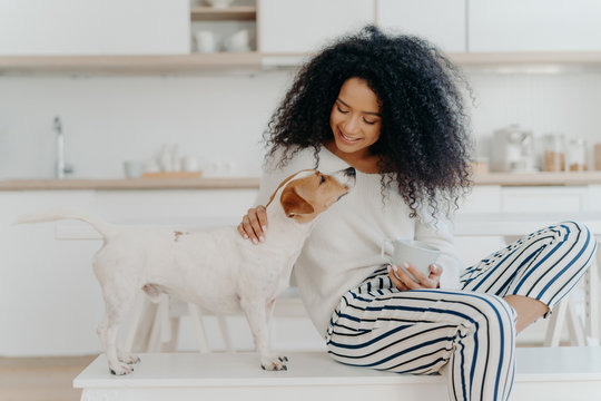 Delighted curly woman with cheerful expression poses with jack russell terrier dog at home, drinks aromatic beverage, dressed in white sweater and striped pants, sit in kitchen. Lady petting puppy