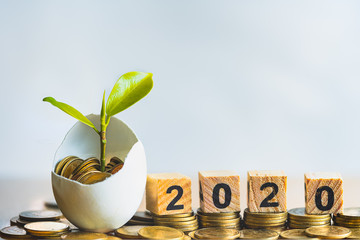 Wood block word 2020, hatched egg and coins with small plant tree, Strategies investment and plan for passive income. Risk management for business growth. Manage money for retirement and pension.