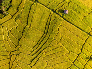 Garden Poster Rice fields Aerial views of Small farmer local house and rice terraces field golden and green colour for tourism stay and relax with nature.