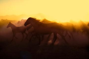 Foto auf AluDibond Braun Wild horses living in nature