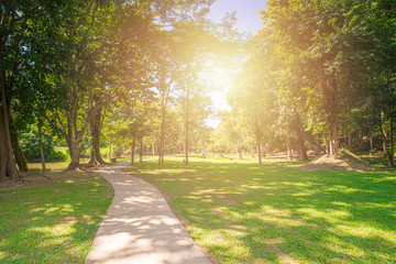 New pathway and beautiful trees track for running or walking and cycling relax in the park on green grass field on the side of the golf course. Sunlight and flare background concept. Fotobehang