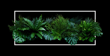 Poster Bloemen Tropical leaves (Monstera, palm, fern, pine, rubber plant) foliage plants bush floral arrangement nature backdrop with white frame on black background.