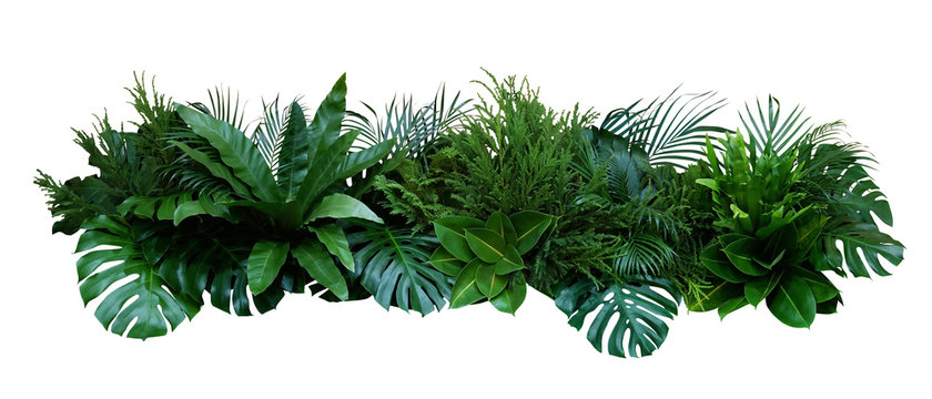 Green leaves of tropical plants bush (Monstera, palm, rubber plant, pine, bird's nest fern) floral arrangement indoors garden nature backdrop isolated on white background, clipping path included.
