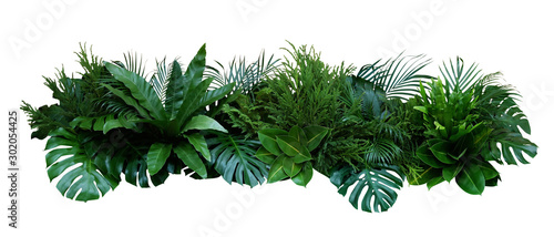 Wall mural Green leaves of tropical plants bush (Monstera, palm, rubber plant, pine, bird's nest fern) floral arrangement indoors garden nature backdrop isolated on white background, clipping path included.