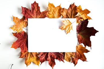 Obraz Jesienne liście na białym tle. Kompozycja z kolorowych liści z ramką i miejcem na tekst - fototapety do salonu