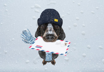 Keuken foto achterwand Crazy dog dog mail deliver postal post man