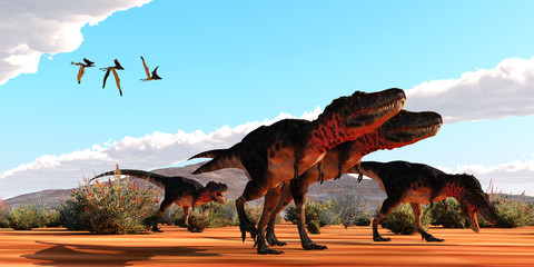 Tarbosaurus Dinosaurs Hunting - A flock of Thalassodromeus pterosaurs fly over a group of theropod Tarbosaurus dinosaurs on the hunt for prey.