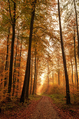 Herbstlicher Waldweg im Morgengrauen / Path through fall coloured forest at dawn