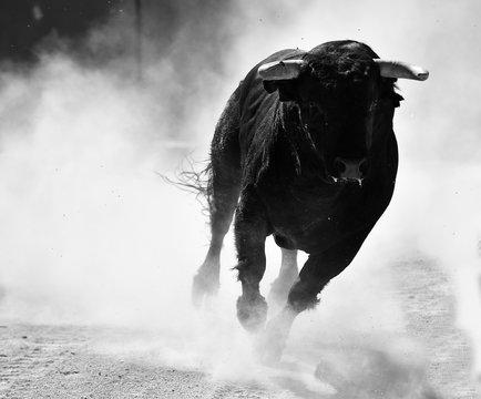 toro negro español con grandes cuernos