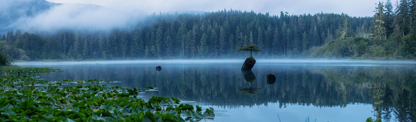 Panoramic View of an Iconic Bonsai Tree at the Fairy Lake during a misty summer sunrise. Taken near Port Renfrew, Vancouver Island, British Columbia, Canada. Wall mural