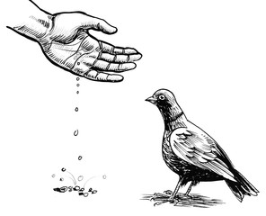 Hand feeding a dove. Ink black and white drawing