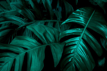 green leaf background, tropical leaf, abstract green leaf texture Wall mural