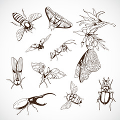 Insect Set, hand Drawn, vector drawn image