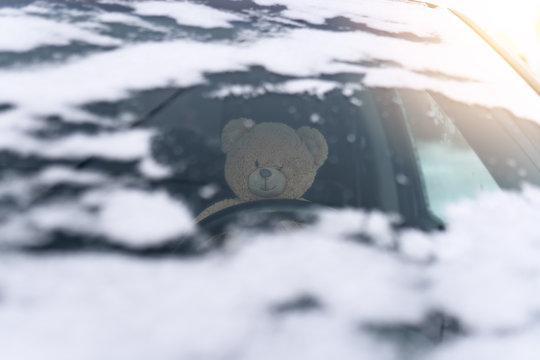 teddy driving a car in winter