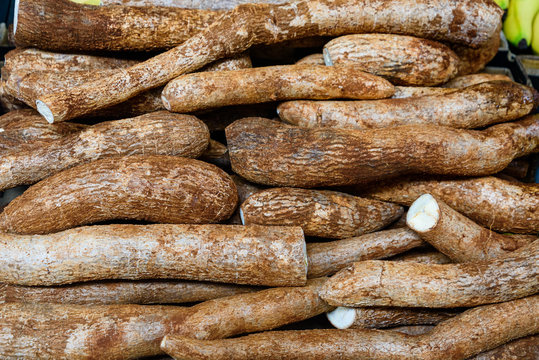 Freshly harvested organic cassava roots in a market close up.