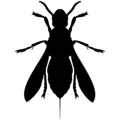 Schattenbild von einer Hornisse aus der Vogelperspektive, isoliert freigestellt vor weißem Hintergrund