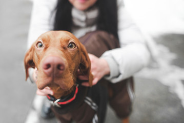 Close-up photo of a cute dog breeds a magyar vizsla, and a woman who holds a pet at the background. Focus on the dog's eyes. Copyspace