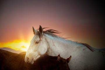 wild horses running in the plain
