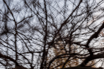 Tree Abstract - motion blurred tree and branches