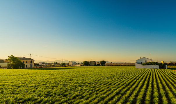 View of agricultural fields and buildings near Valencia before sunset. Spain