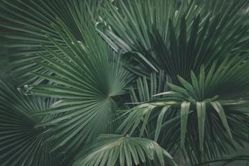 Photo sur Aluminium Palmier Prise de vue sur un feuillage de palmiers.