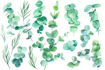 set of green leaves and branches eucalyptus on a white background tropical plants, watercolor illustration, botanical painting