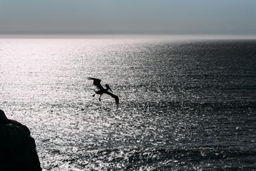 Pelikan im Abendlicht über dem Meer als Silhouette