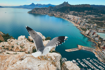 On the peak top of Penon de Ifach cliff flying seagull. Picturesque view from top to the Calpe cityscape, Mediterranean Sea and mountainous area. Province of Alicante, Costa Blanca, Spain