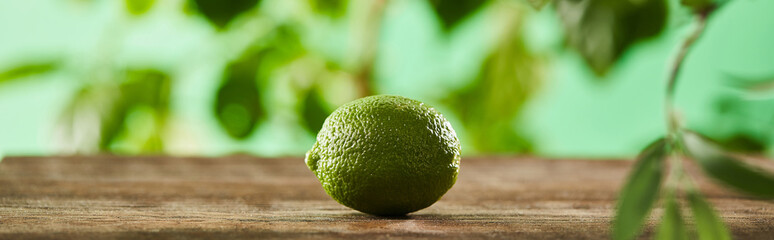 panoramic shot of fresh and whole lime on wooden surface