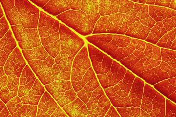 macro photo of autumn leaf texture