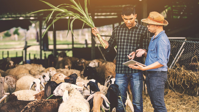 Veterinarians advise farmers to raise sheep and goats; Caring and supporting farmers and providing funding for farm